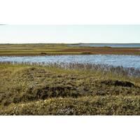 A coastal plain within the Arctic National Wildlife Refuge (Photo: USFWS)