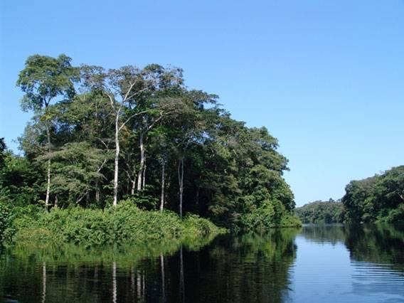 Φωτογραφία: Εθνικό Πάρκο Salonga